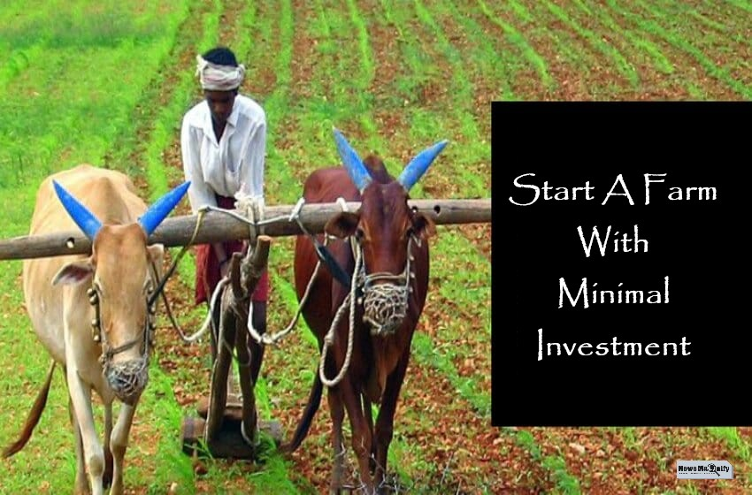 How To Start A Farm With Little Investment?
