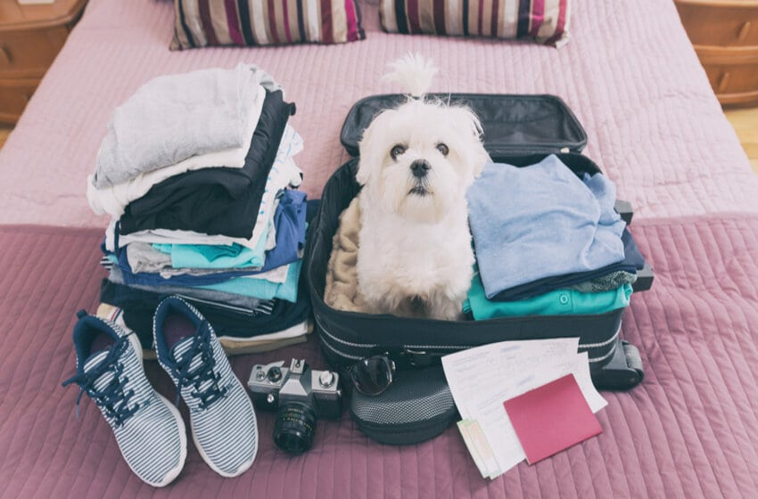 Now You Can Travel With Pets Across India, Know How